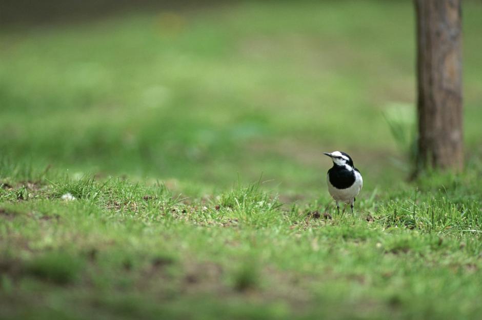 生物多様性保全