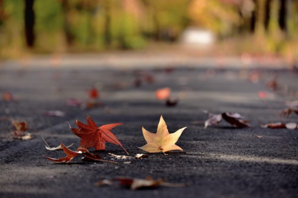 街路樹の種類と役割を紹介!なぜ落葉樹が植えられているのか!?